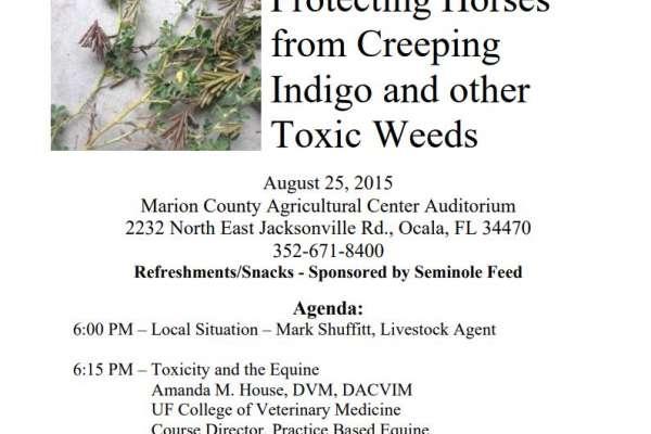 Creeping Indigo August talk