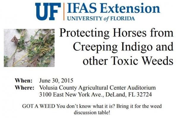Creeping Indigo June talk