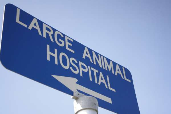 Blue Large Animal Hospital sign